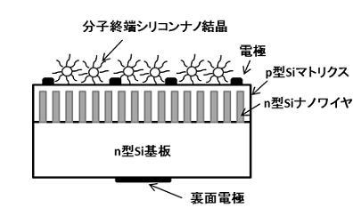 分子終端シリコンナノ粒子を利用した太陽電池構造の模式図